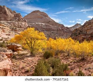 Hickman Natural bridge Trail, Capitol Reef Nat'l Park, Utah, USA