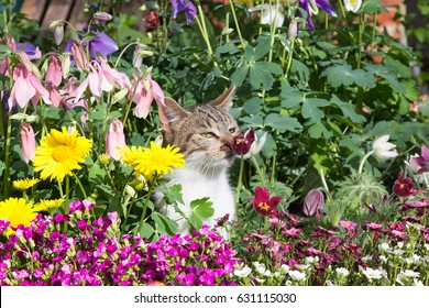 A hidden adorable young cat between perennial flowers in the Garden smelling intensive at the blossoms.