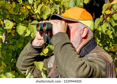 Hidden between autumn leaves a senior hunter with signal cap watches his hunting area through binoculars on a beautiful October afternoon.