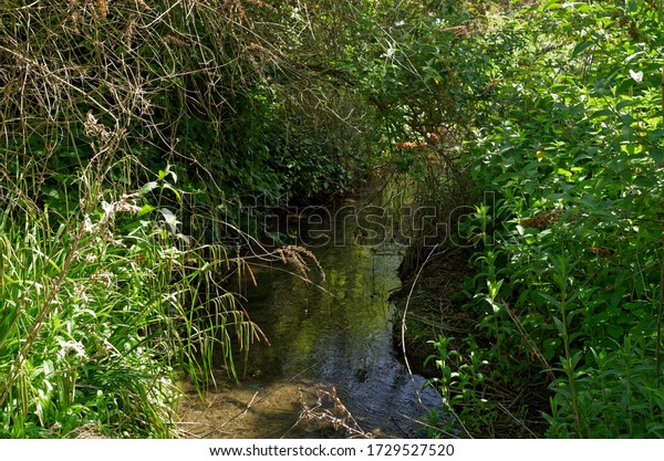 hidden-brook-flows-through-thickets-600w