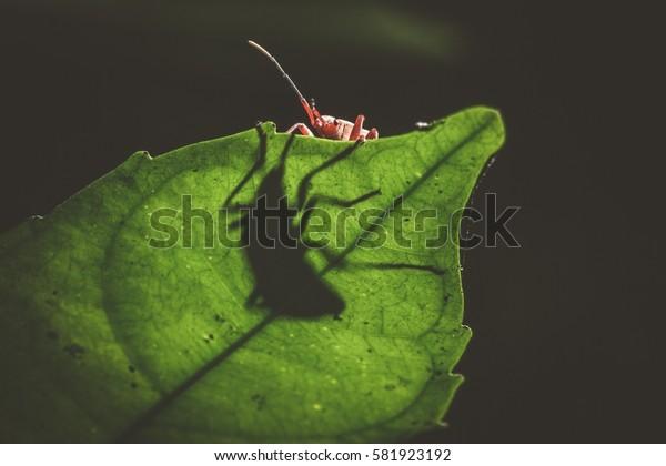 hidden bug on leaf with shadow