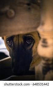 Hidden dog