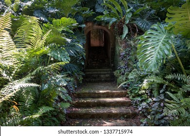Hidden doorway  and brick path steps in Enchanting Tropical Forest - Fort-Canning, Singapore