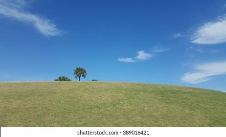 Hidden palms behind grass
