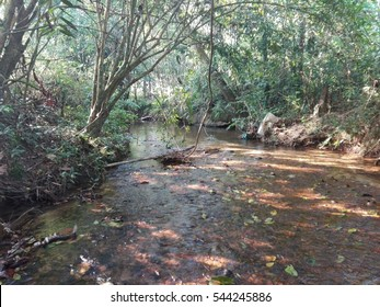 A hidden pure water stream in a forest