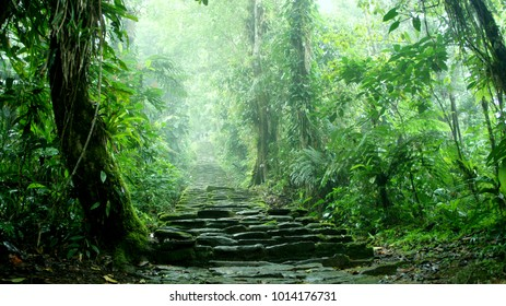 Hidden staircase deep in the Colombian Jungle belonging to the ruins of Ciudad Perdida