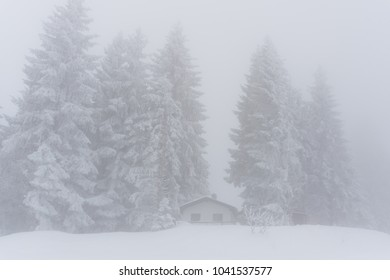 hidden tiny cottage in deep winter in the forest on a foggy day