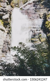 hidden waterfalls and wild Australian bush during a hike in Tasmania with its untouched landscape featuring eucalypus and ferns