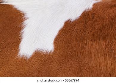 Hide a cow. Macro