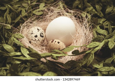 Hiding easter eggs in nest and greenery
