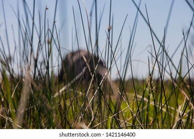 Hiding for the elefant behind the grass
