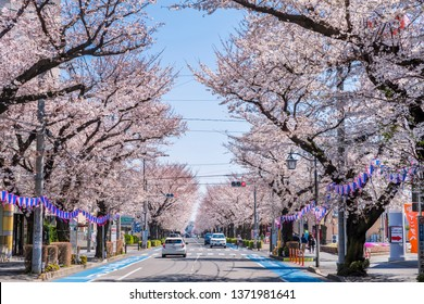 """HIGASHIMURAYAMA, TOKYO / JAPAN - APRIL 3 2019 : The scenery of a row of cherry trees in full bloom. A lot of cherry trees are planted in the street called """"Sakura Street"""" continuing from the station."""