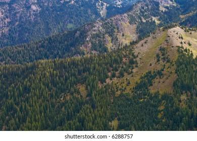 High altitude alpine forest on Hurricane Ridge in Olympic National Park, Washington State