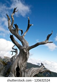 High altitude dead tree under blue sky.