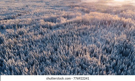 High angle aerial view of forest covered by snow at winter sunset in Kurjenrahka National Park, Finland