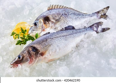 High Angle Full Length View of Raw Fresh Fish Chilling on Cold Bed of Ice with Herb Garnish and Lemon Slices