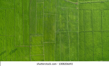 High angle image, green rice field plot