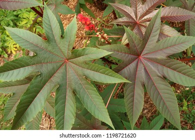 High angle on large, healthy leaves in the park. Summer season.