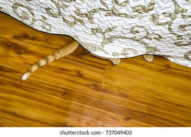 High angle shot of cat paw peeking under the bed