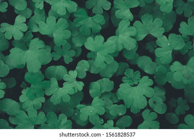 A high angle shot of clover leaves floating on the water