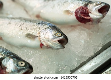 High Angle Still Life of Variety of Raw Fresh Fish Chilling on Bed of Cold Ice in Seafood Market Stall with Copy Space