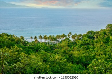 A high angle view of a beautiful, lush forest and coconut palm trees near the sea, on a tropical island in the Philippines. Puerto Galera, Mindoro Province.