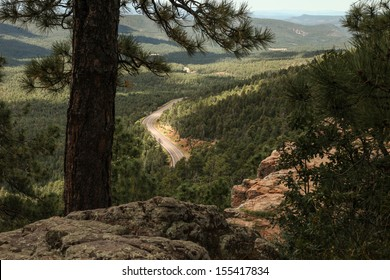 High Angle View of Big Pine Forest with Distant Curving Paved Road Below/Forest of pine trees and winding highway in distance