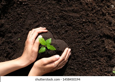 High angle view close up  two hands holding one young seedling  in heart shape soil. Environmental awareness, planting trees project, save nature, secure the future for children and next generation.