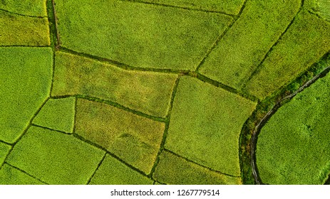 High angle view of Field in Thailand .