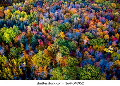 High angle view of a forest in Ontario, Canada in autumn
