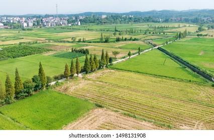 High angle view of green farmland fields