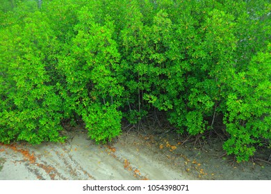 High angle view of mangrove forest