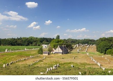 A high angle view of some of the 3000 standing stones at Carnac, Brittany, France. It is believed that these stones were placed in position around 5000 years ago.