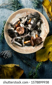 high angle view of some spanish edible mushrooms, such as yellow knights, grey knights and saffron milk-caps, and some dry leaves and twigs of different forest bushes on a gray rustic wooden table