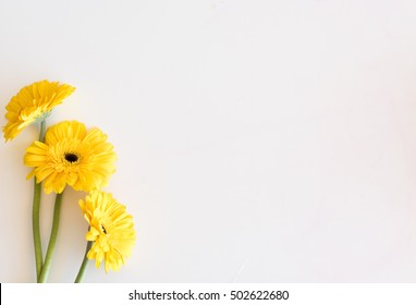 High angle view of three yellow gerberas on white table - nature background