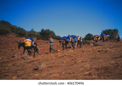 HIGH ATLAS, MOROCCO - OCT 31, 2000 - Porters guide their mules on the mountain trails of the  High Atlas mountains in Morocco
