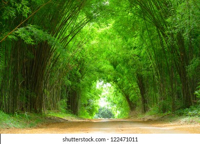 The high bamboo both side of the road bend to cover the clay road.