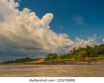 High bank of the Amazon river during the low water season. Amazonia. Brazil. South America.