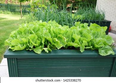 high bed in a garden