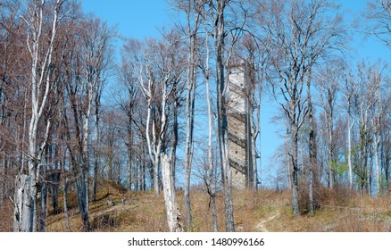 high building with ledder in the forest