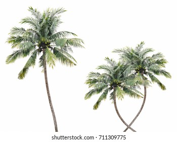 High coconuts isolated.