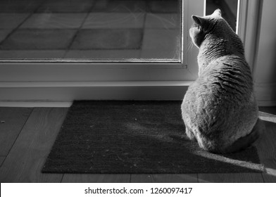 High contrast black and white picture of an elegant British Short Hair cat sitting in the sun on a door mat casting her shadow on the floor next to an open patio door in Edinburgh City, Scotland,