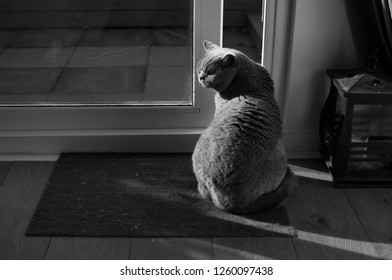 High contrast black and white picture of an elegant British Short Hair cat sitting in the sun on a door mat casting her shadow on the floor next to an open patio door and a black asian lamp