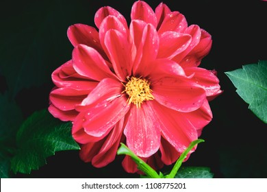 High contrast red flower