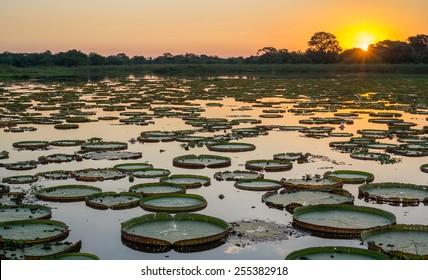 Hochkontrastreiche Sonnenuntergänge im brasilianischen Pantanal mit Siegeregas und Wasser
