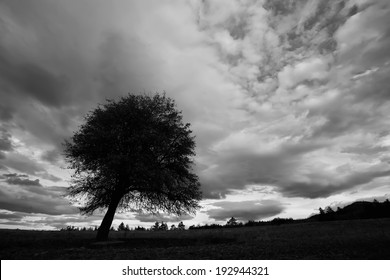 high contrasted black and white cloudscape with tree silhouette in foreground