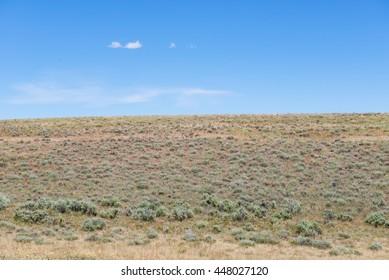 High desert sagebrush field with horizon and blue sky