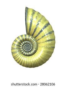 high detailed sea shell