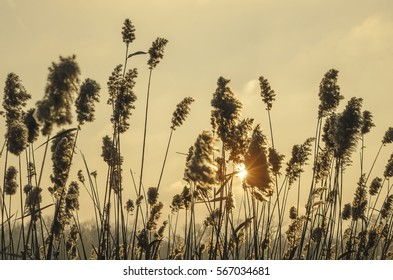 High dry grass in wind before warm sunset