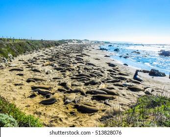 High dynamic range (HDR) Elephant seal rookery on Piedra Blancas beach in Big Sur California